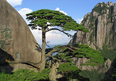 2 Days Mt. Huangshan Mountain and Village Highlight