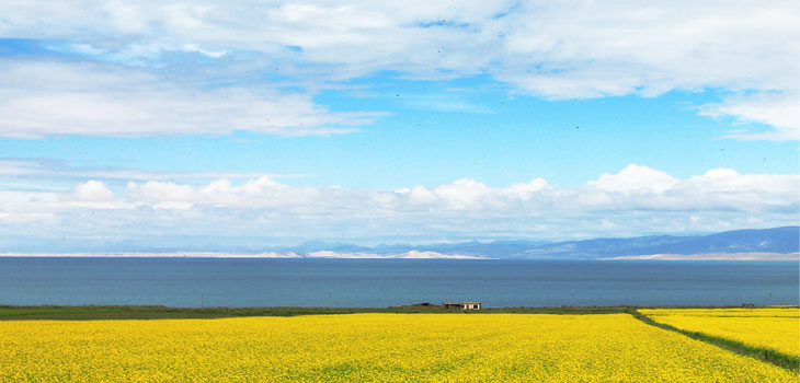 Qinghai Lake One-day Tour