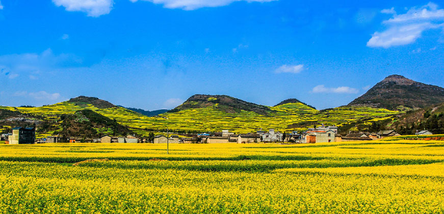 5 Days Luoping Golden Canola Flower Tour