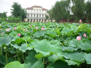 1 Day Countryside Tours in Chengdu